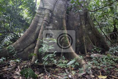 Foret Tropicale Amazonie Perou Papier Peint Papiers Peints