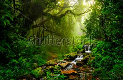 Papiers peints Forêt tropicale asiatique