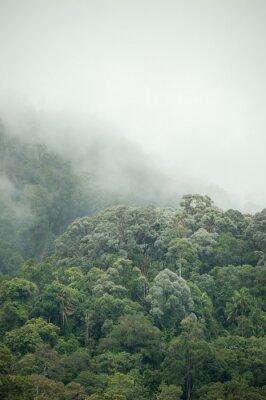 Papiers peints Forêt tropicale dans le sanctuaire de faune de Hala-Bala de Thaïlande