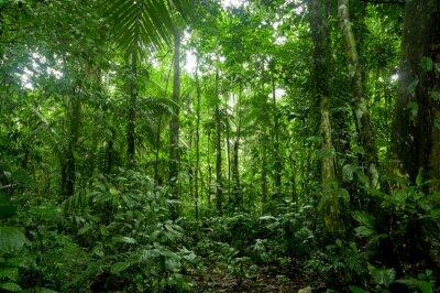 Papiers peints Forêt tropicale Paysage, Amazon