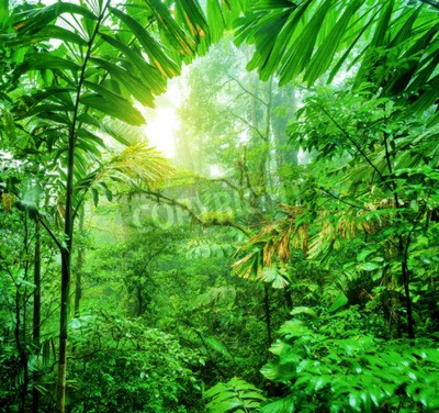 Papiers peints Forêt tropicale verte dans le parc national du Costa Rica, merveilleuse nature sauvage de l'Amérique centrale