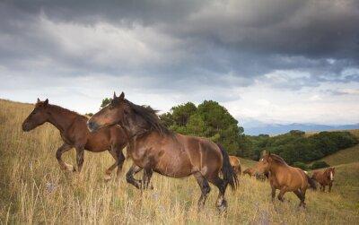 Papiers peints Foto di cavalli al Galoppo