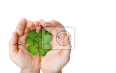 Four Leaf Clover dans la main