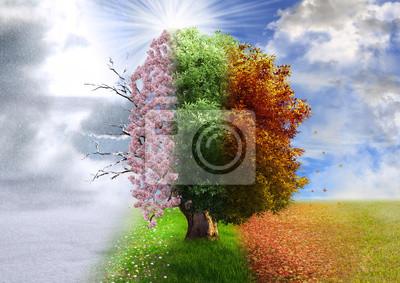 Papiers peints Four season tree, photo manipulation, magical, nature
