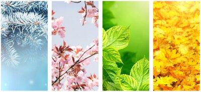 Papiers peints Four seasons of year