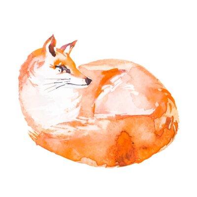 Papiers peints Fox isolé sur fond blanc. Aquarelle. .