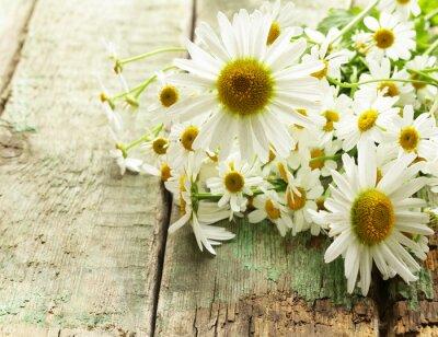 Papiers peints Fraîches, camomille, fleurs, bouquet, bois, fond