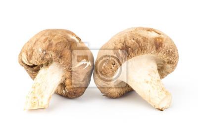 Frais champignons shitake