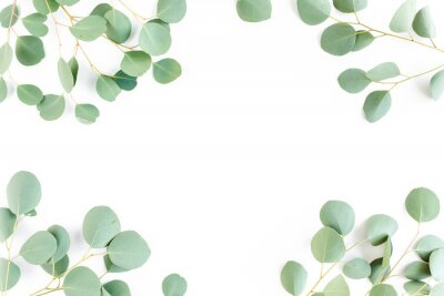 Papiers peints frame of green branches, eucalyptus leaves on a white background. flat layout, top view