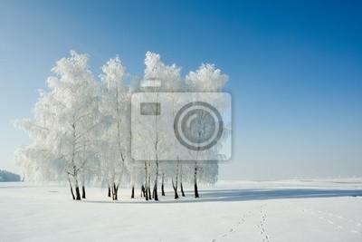 Froide journée d'hiver, givre et la belle rime sur les arbres