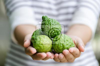 Fruit de bergamote tenant à la main. Usine de fines herbes