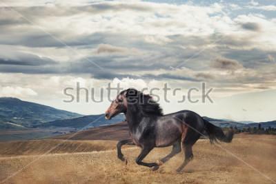 Papiers peints Galloping horse