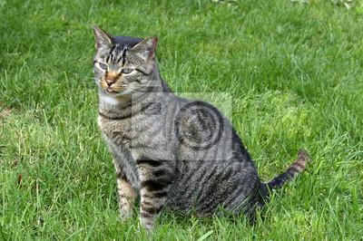 gatto Soriano castelvetro Modène Émilie-Romagne