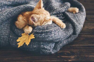Papiers peints Gigner chaton dormir