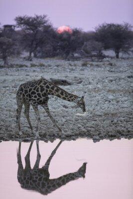 Papiers peints Girafe au trou d'eau d'Okaukuejo.