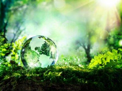 Papiers peints Globe de cristal sur la mousse dans une forêt - notion environnement