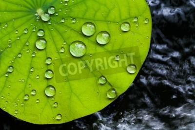 Papiers peints Gouttelettes d'eau sur la feuille de lotus