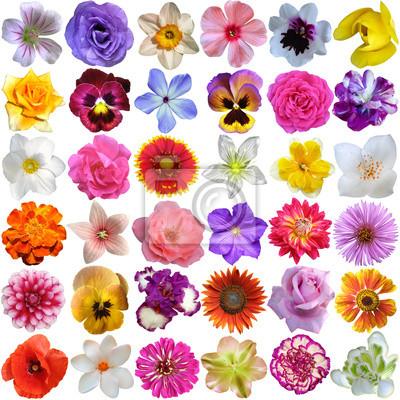 Papiers peints Grande sélection de diverses fleurs isolé sur fond blanc