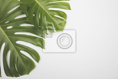 Grande vert tropical feuille monstera plante papier peint papiers peints grande vert tropical feuille monstera plante altavistaventures Image collections