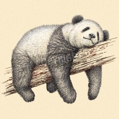 Papiers peints Graver isolé panda ours illustration croquis. Art linéaire