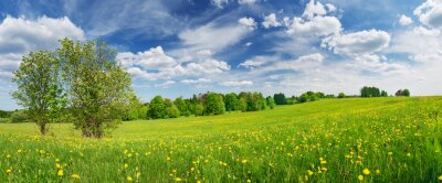 Papiers peints Green field with white and yellow dandelions outdoors in nature in summer