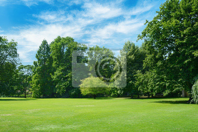 Papiers peints Green glade covered with grass in park. Free space for text.
