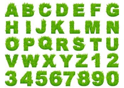 Papiers peints Green grass alphabet avec des lettres et des chiffres