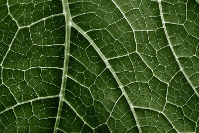 Papiers peints green leaf close up in the detail