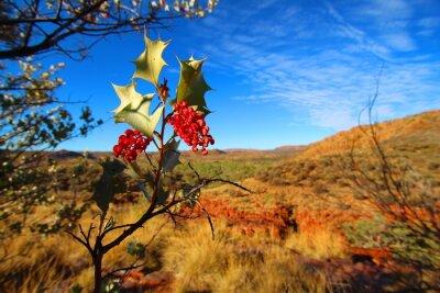 Papiers peints Grevillea wickhamii à Trephina Gorge, Australie