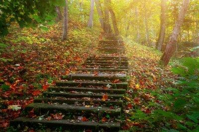 Papiers peints Grimpez les escaliers au soleil