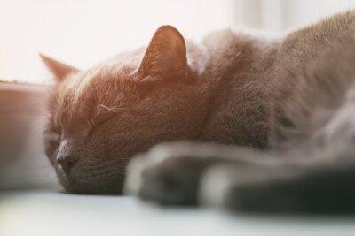 Papiers peints Gris, chat, dormir, fenêtre, vendange, tonique