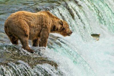 Papiers peints Grizzly Bear Parc national de Katmai Alaska
