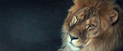 Papiers peints gros plan d'un lion d'Afrique