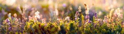Papiers peints gros plan de fleurs sauvages et d'herbe, photo panoramique horizontal