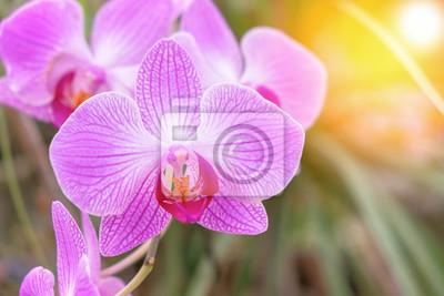 Gros Plan De La Belle Fleur Dorchidee Rose Phalaenopsis Avec Papier