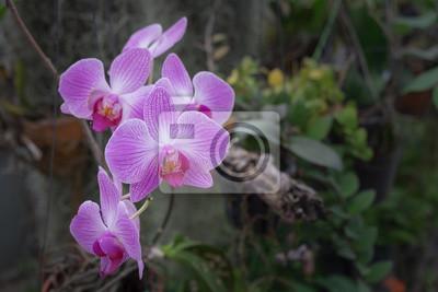 Gros Plan De La Belle Fleur Dorchidee Rose Phalaenopsis Dans Papier