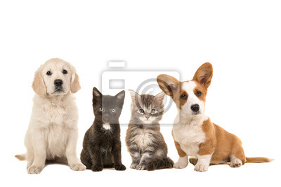 Group of different pets, two puppies and two kittens sitting next to each other on a white background