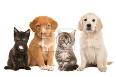 Group of young pets two sitting puppies and two sitting kittens facing the camera isolated on a white background