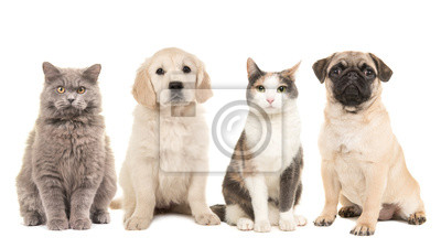 Groupe d'animaux domestiques, chiens et chats adultes sur fond blanc