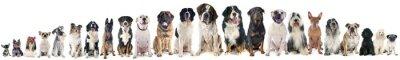 Papiers peints groupe de chiens