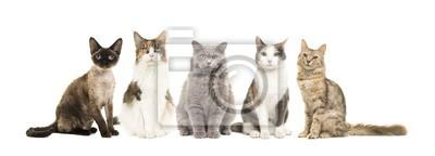 Groupe de différentes races de chats assis en regardant la caméra isolé sur fond blanc