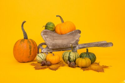 Groupe, orange, vert, citrouilles, bois, brouette, jaune, fond