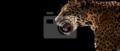 Papiers peints guépard, léopard, jaguar