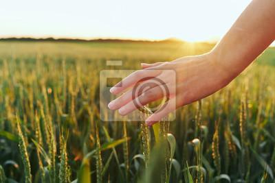 Papiers peints hand in field of wheat