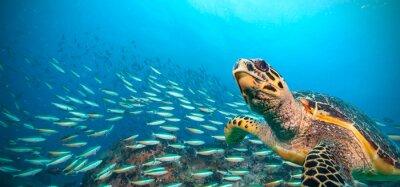 Papiers peints Hawksbill, mer, tortue, Indien, océan