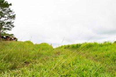 Papiers peints herbe montagne