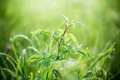 Papiers peints Herbe verte fraîche avec des gouttes d'eau sur l'arrière-plan de rayons de soleil. Mise au point molle