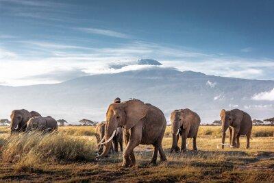 Papiers peints Herd of African Elephants in Front of Kilimanjaro