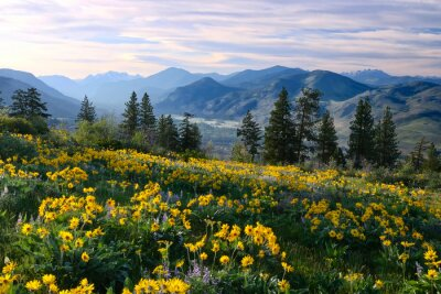 Papiers peints Hiking in Washington. Meadows with arnica  and lupine wildflowers and Cascade Range Mountains near Winthrop. WA. Unites States.