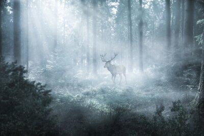 Papiers peints Hirsch im nebeligen Wald